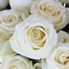 Rose White Avalanche (Bunch of 20) Online