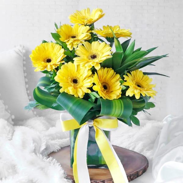8 Yellow Gerberas Arranged in Square Vase
