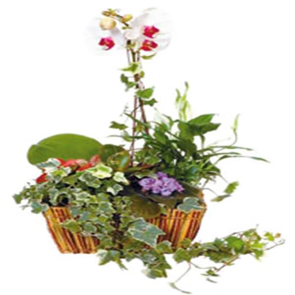 Arrangement of Plants in basket