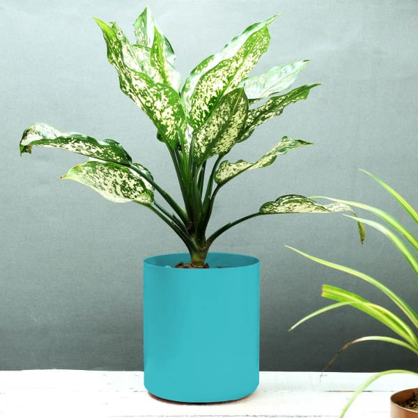 Blue Cylindrical Planter (Without Plant)