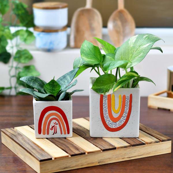 Ceramic Planter for Maa (Set of 2)