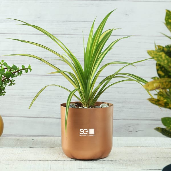 Copper Finish Planter without Plant