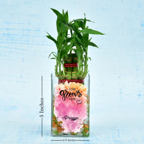 Cute Personalized Two Layer Lucky Bamboo Plant In A Glass Pot (Less Water/Mild Sunlight)