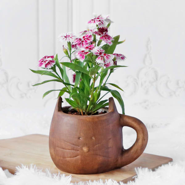 Dianthus Flower Plant in Ceramic Planter with Handle