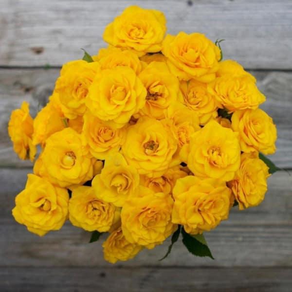 Frisco'd - 40 Yellow Spray Roses Bouquet