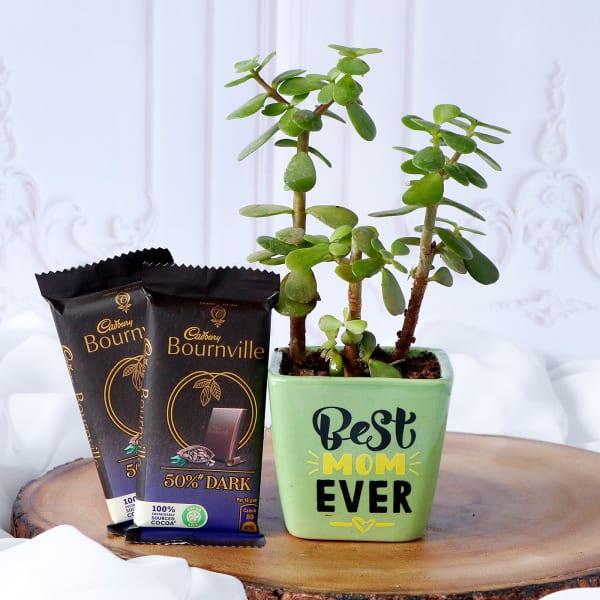 Jade Plant In Best Mom Ever Ceramic Planter With Cadbury Chocolates