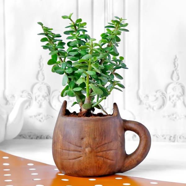 Jade Plant in Feline Ceramic Planter
