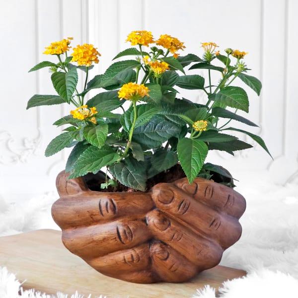 Lantana Flower Plant in Folded Hands Ceramic Planter