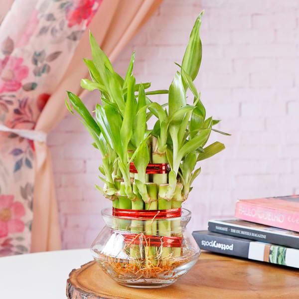 Lucky Bamboo In Mini Bowl Glass Vase