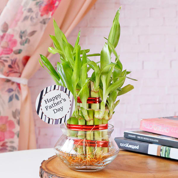 Lucky Bamboo In Mini Bowl Glass Vase for Father's Day