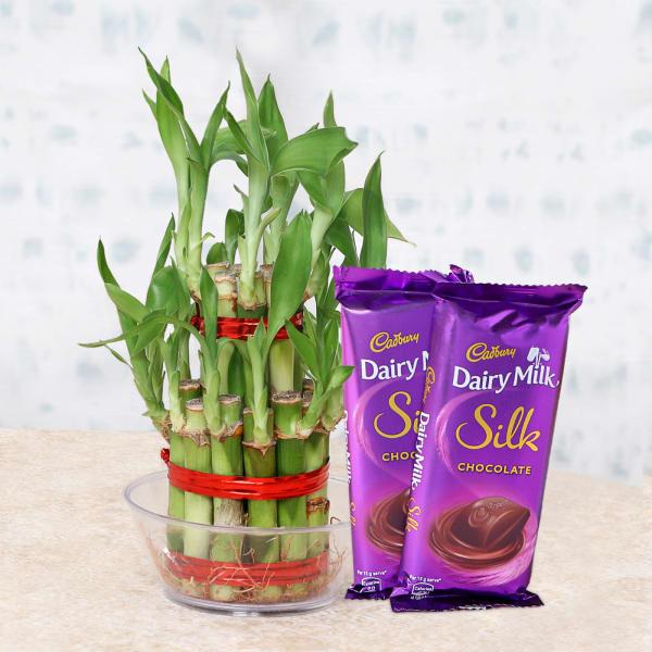 Lucky Bamboo with Cadbury Silk Chocolates