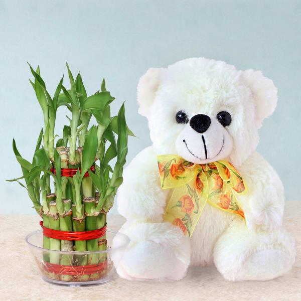 Lucky Bamboo with Teddy Bear