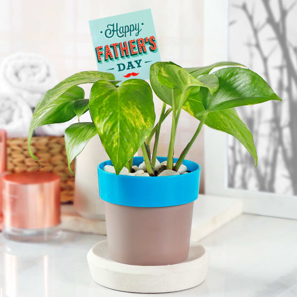 Money Plant in Plastic Planter for Father's Day