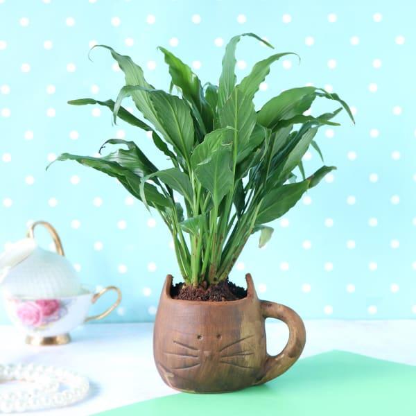 Peace Lily Plant in Cat-Mug Shape Ceramic Planter
