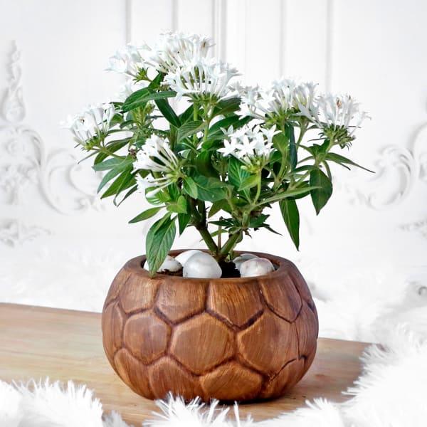 Pentas Flower Plant in Honey Comb Pattern Ceramic Planter