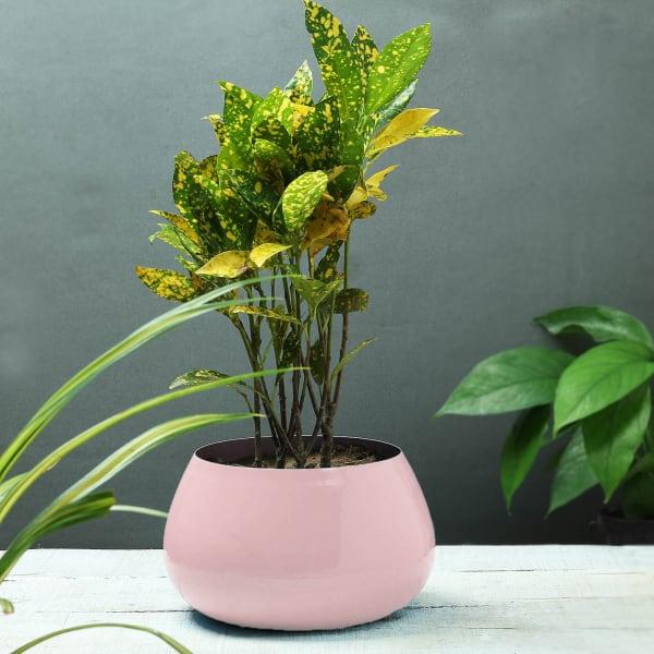 Pink Designer Planter (Without Plant)