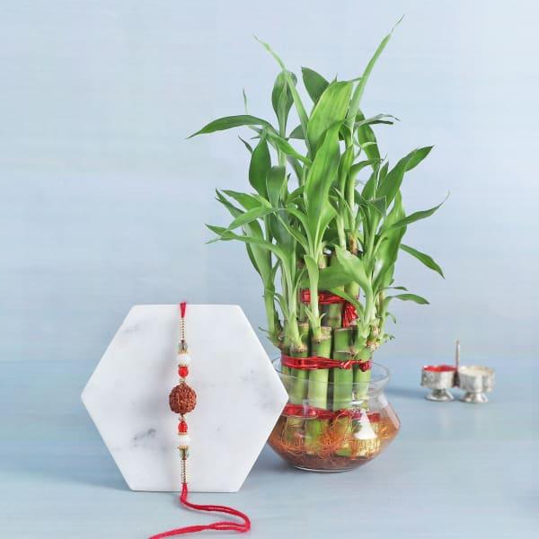 Rudraksh Rakhi With Bamboo Plant