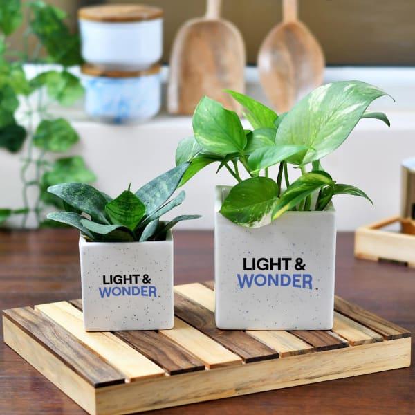 Set of 2 Ceramic Planters With Logo
