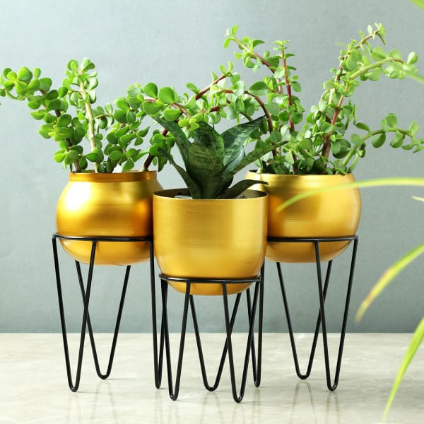 Set of 3 Brass Finish Planters with Stand (Without Plants)