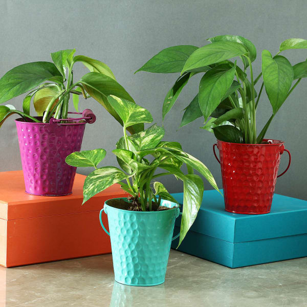 Set of 3 Colorful Bucket Planters (Without Plants)