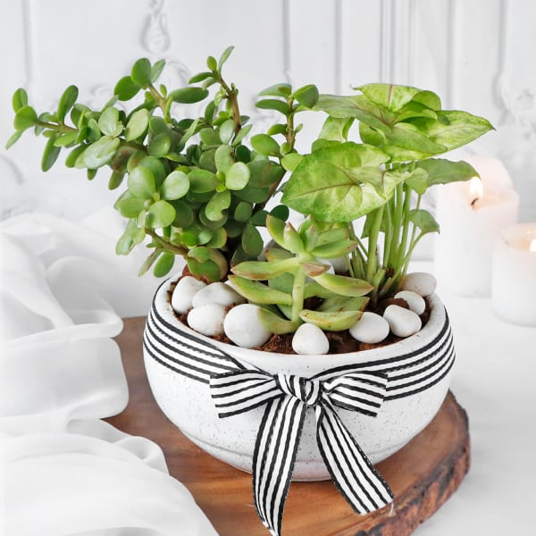 Soothing Greens in Pot