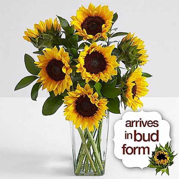 Sunflower Radiance