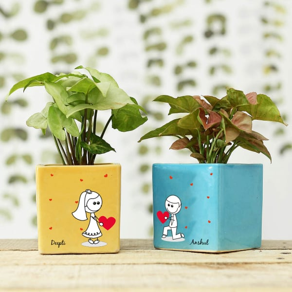 Syngonium Plants in Personalized Heart Printed Ceramic Pots
