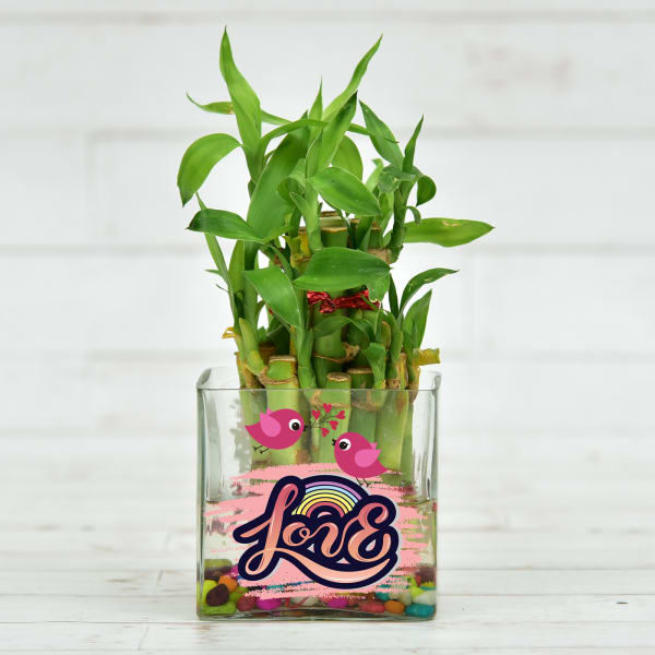 Two Layer Lucky Bamboo Plant in Customized Love Glass Pot