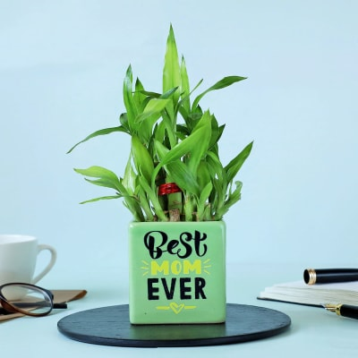 2 Layer Bamboo Plant In Best Mom Ever Ceramic Planter