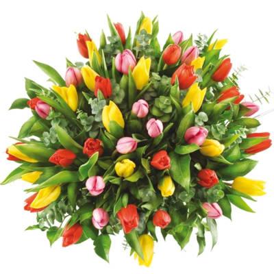 50 colourful tulips