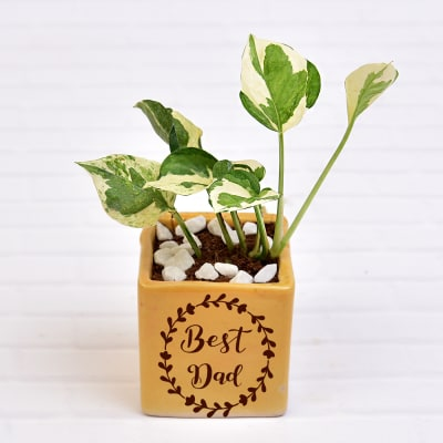 Air Purifying Money Plant in Best Dad Customized Ceramic Pot (Low Light/Moderate Water)