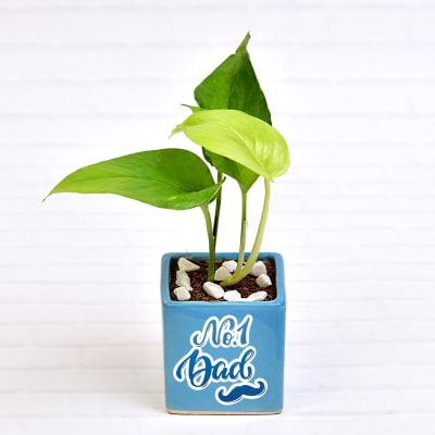 Air Purifying Money Plant in Personalized Dad Special Ceramic Pot (Moderate Light/More Water)