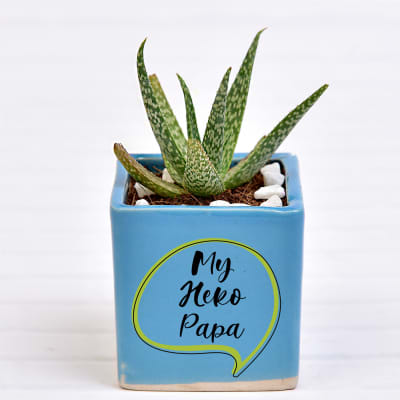 Aloe Succulent in Papa Special Personalized Ceramic Pot (Filtered Light/Less Water)