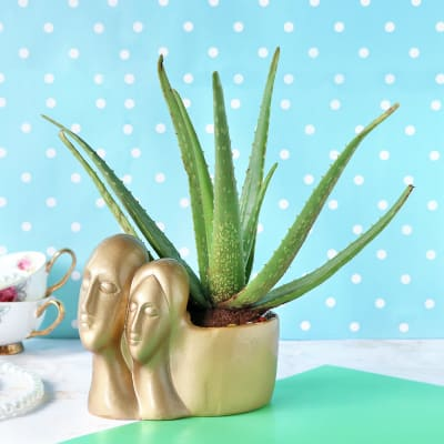 Aloe Vera Plant with Designer Couple Ceramic Planter