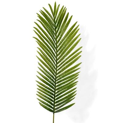 Areca Palm (Bunch of 50)