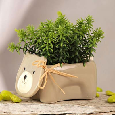artificial herbs with teddy shaped ceramic pot: gift/send home and