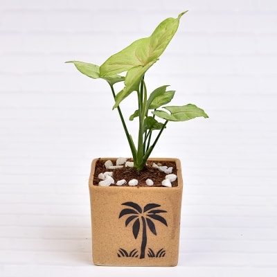 79459a3031 Auspicious Money Plant in Fathers Day Personalized Ceramic Planter  (Moderate Light More Water)