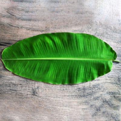 Banana Leaf (Bunch of 10)