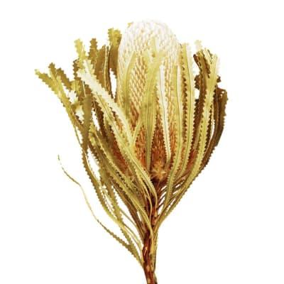 Banksia Hookeriana Yellow (Bunch of 5)