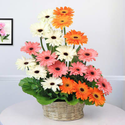 Basket Of 20 Mix Gerberas