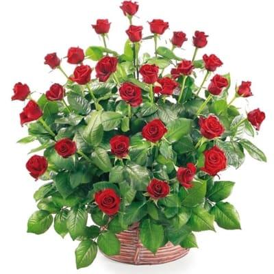Basket of 30 roses