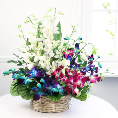 Basket of Mixed Orchids