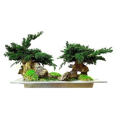 Bonsai Double