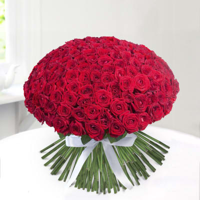 Bunch of 1000 Red Roses