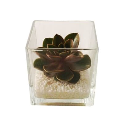 Cactus in glass vase