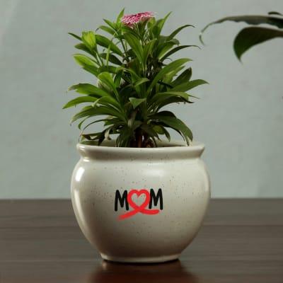 Ceramic Planter for Mom