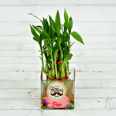 Fathers Special Two Layer Lucky Bamboo In Glass Vase (Mild Light/Less Water)