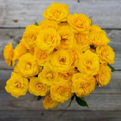 Frisco'd - 40 Yellow Spray Roses Bouquet