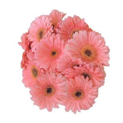 Gerbera Bunch - Pink