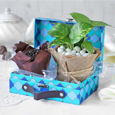 Gift Hamper With Money Plant & Muffin